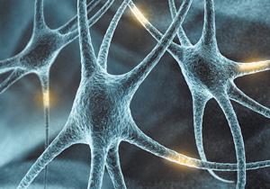 Активность мозга может вызывать изменение ДНК нейронов